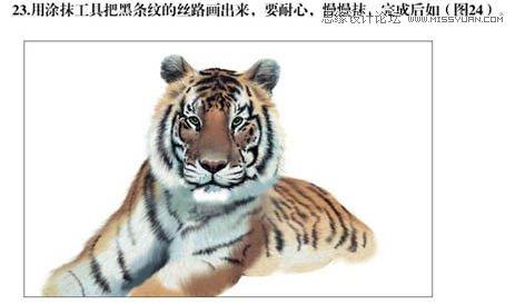 Photoshop鼠绘草丛中的老虎插画教程