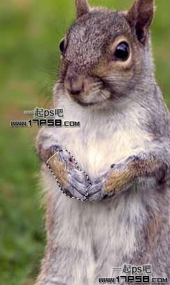 Photoshop合成可爱的武装松鼠战士教程