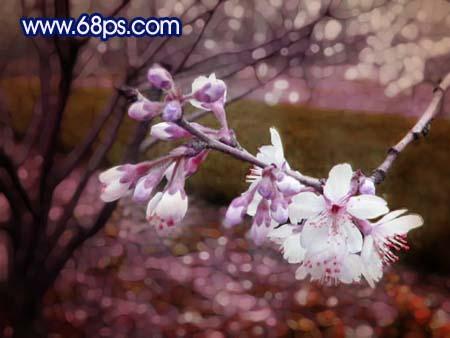 Photoshop调出鲜艳梦幻效果的桃花照片