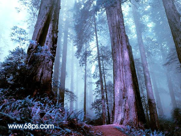 Photoshop调出紫色迷雾效果的树林照片教程