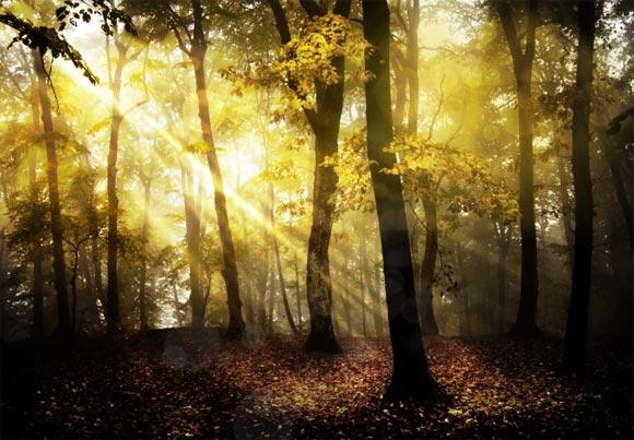 Ps修复调制高清阳光照射下的树林图片处理教程