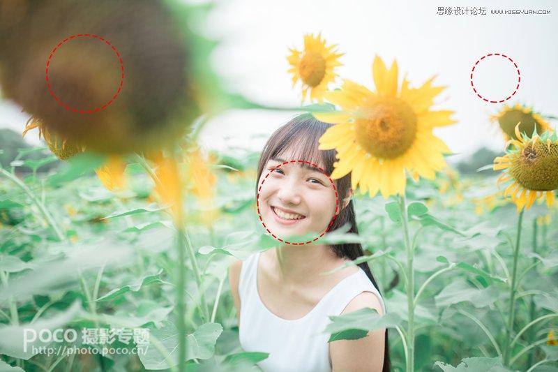 Photoshop调出日系暖色效果向日葵中女孩照片