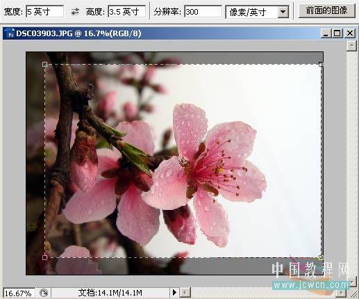详解Photoshop裁剪工具图片裁剪技巧用法
