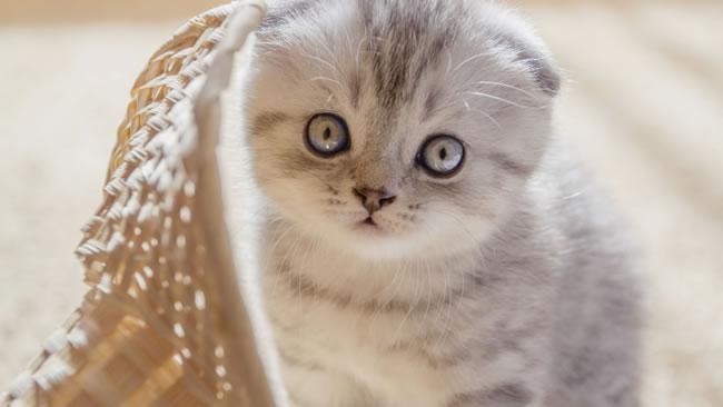 猫咪图片大全可爱